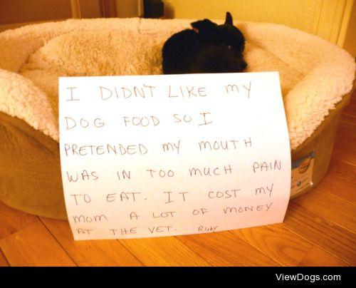 Kibble Complaint Department  I didn't like my dog food so…