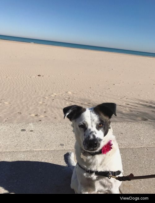 This is my girl Jules! She's a collie/spaniel mix. She's the…