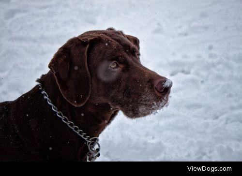 Snowy bird dog