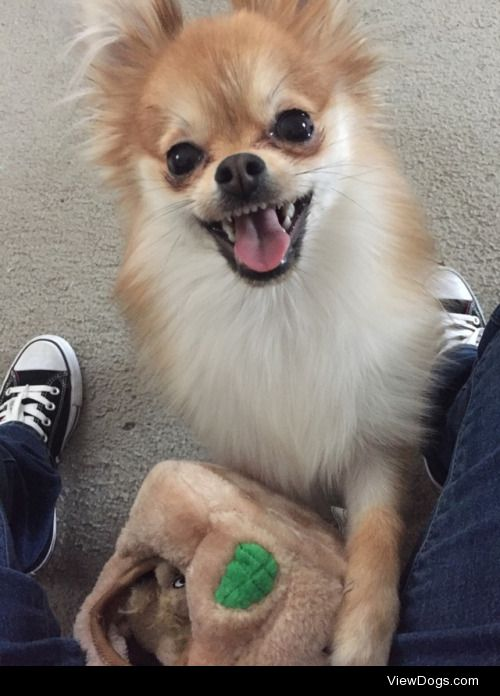 Gigi got a new toy and now she's all smiles.
