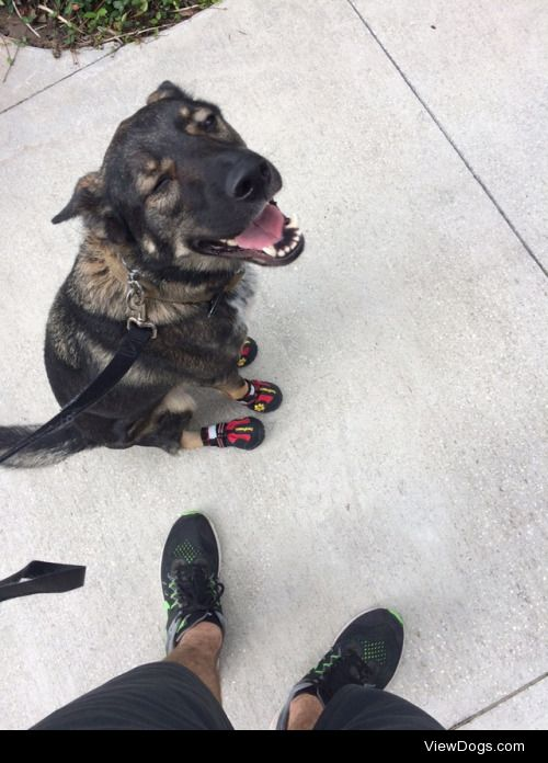 This is Chief. He wears shoes during the summer so the asphalt…