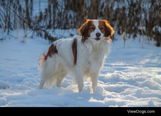 Which gundog do you like best (and why)? What are your top 3 gundogs? (ripping off the other user)