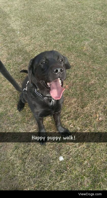 This is my handsome boy, Titan. He's a 2.5 year old English…