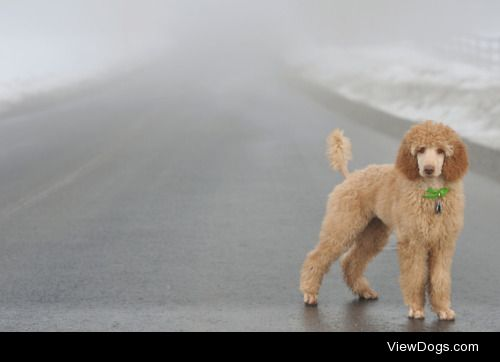 """special-agent-poodle:  """"[Dog]kind has legs so it can wander."""" ―…"""