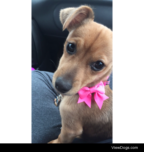 This is my puppy, Clover! Her favorite things to do are smell…