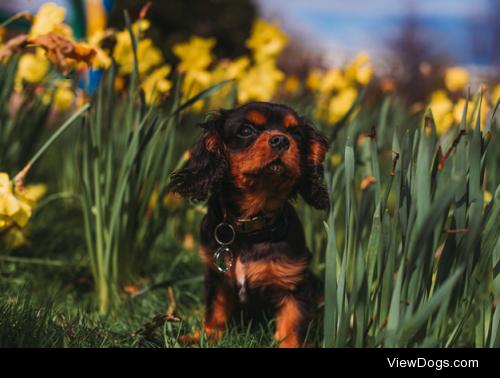 Spring by Mark Liddell
