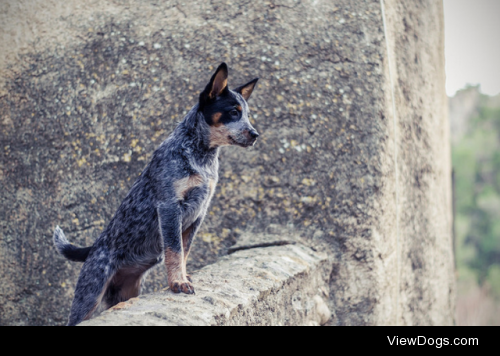 Watchdog by Bodow