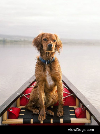 Happy Friday by Watson Adventure Dog