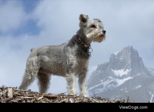 Mountain dog by Robert Zawaski