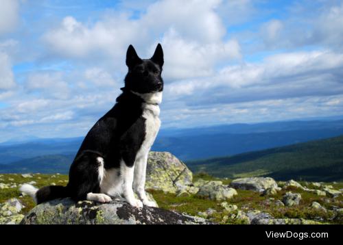 Mountain dog by Hannah