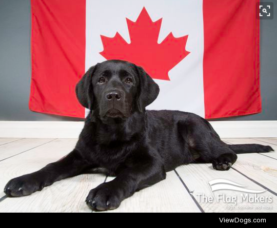 Canadian dog breeds for Canada 150!