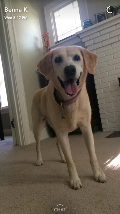 My sweet 15 year old lab runt baby! Sunshine Ray Marie or Sunny…