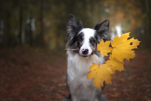 Autumn Love :by Martyna Ożóg facebook | instagram | flickr
