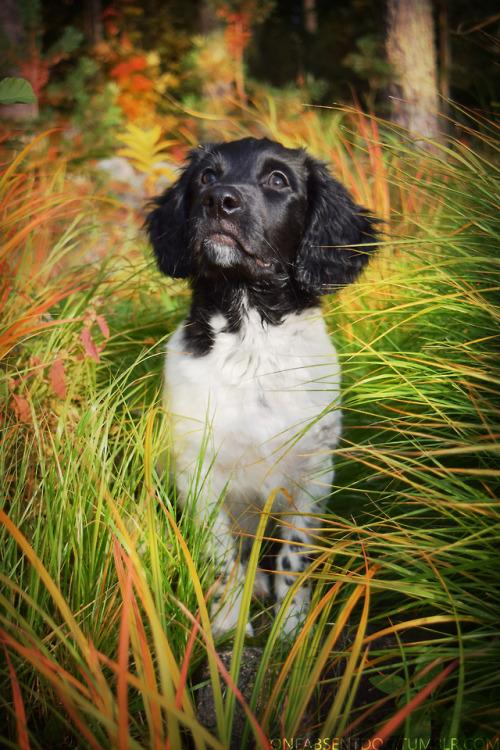oneabsentdog:  Autumn puppy