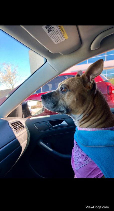 """Bonnie is a rescue from the shelter. I basically asked, """"Which is the best one?"""" And all the…"""