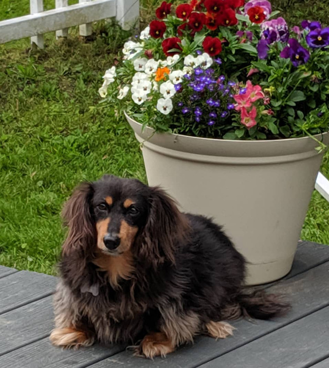Thank you so much for posting Max on your page. He unfortunately passed away on Wednesday and this…