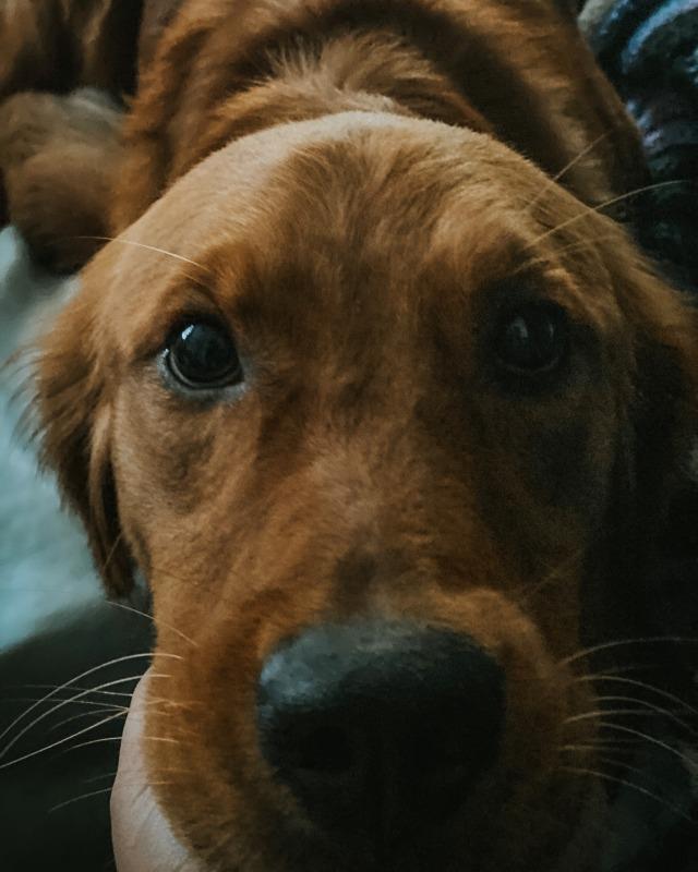 bo0fs:Happy national dog day