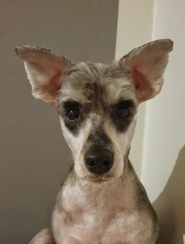 soulpups:no more ear hair!!! now she's full elf