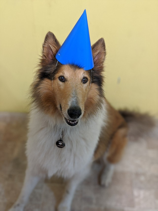 snoots-and-wiskers:Birthday boy with his birthday hat that got a bit squashed 🎂