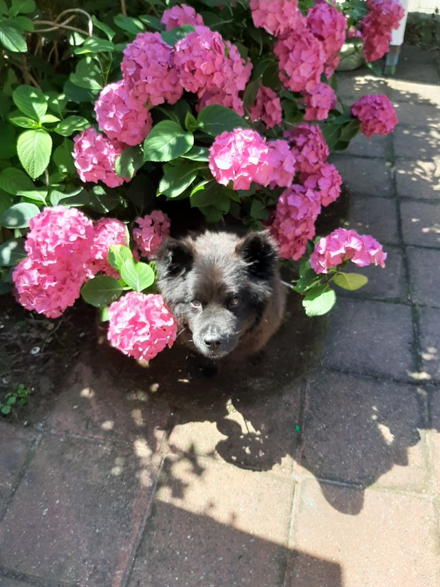 mika hiding in the flowers
