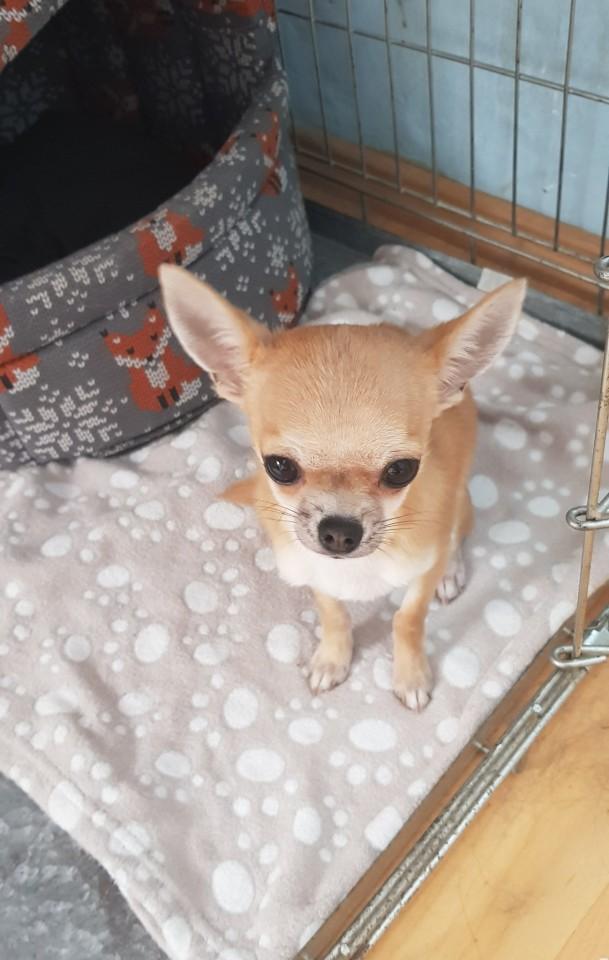 pocketdogs:tofu says good morning 🌄