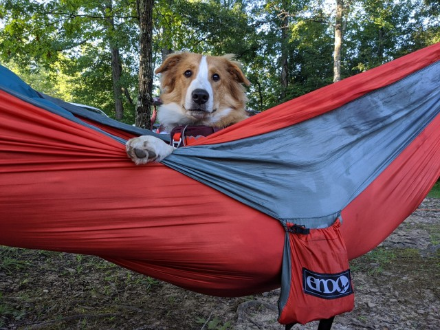 snoots-and-wiskers:We went camping this weekend and someone really liked the Eno