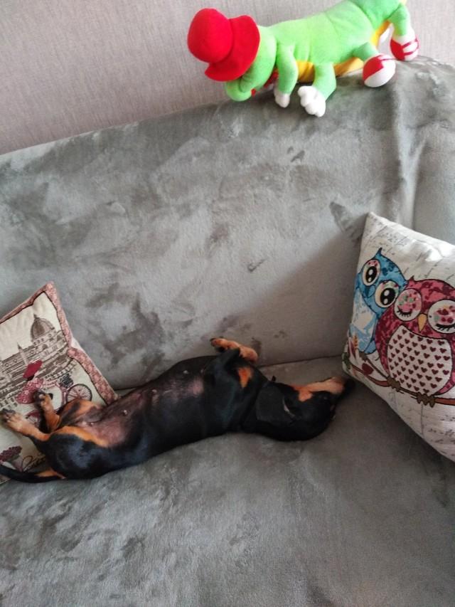 Наша Симонка спит. Ей 11 лет, она уже старушка😆