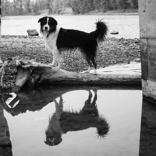 itsybitsyblitz:  handsome, even when sopping wet.  📷:…