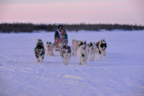 darkwood-sleddog:Images from the Ivakkak 2020, a dog sled race…