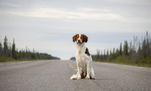 mav-adventurerinthenorth:  On the road