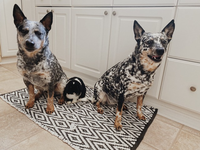 mulgi:family pic
