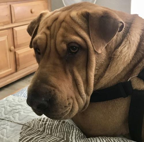 Jake the dog, Ba-shar