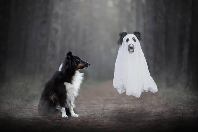 hadissima:Happy Halloween!