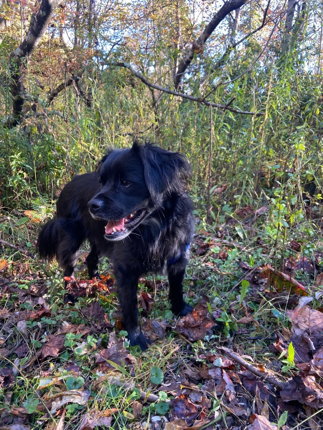 Alfie and I had a nice hike through the fall foliage 🍁