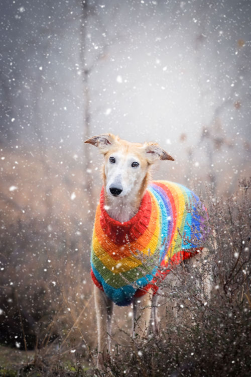 thedutchsighthound:  We really want snow so this photographer…