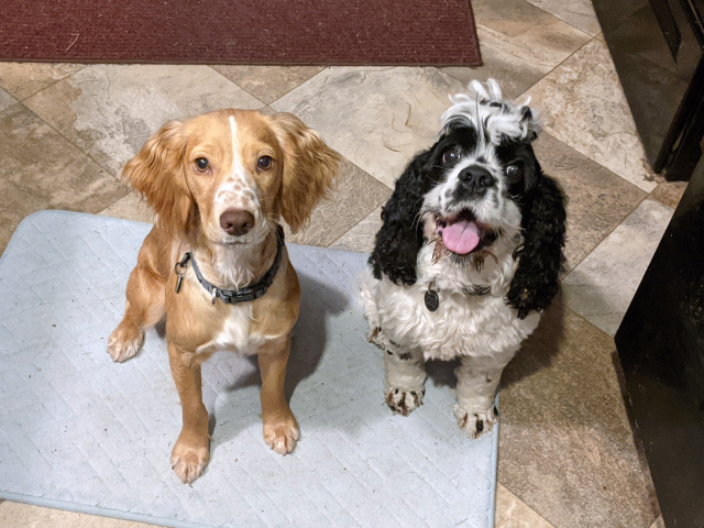 doomspaniels:They're animated by different studios.
