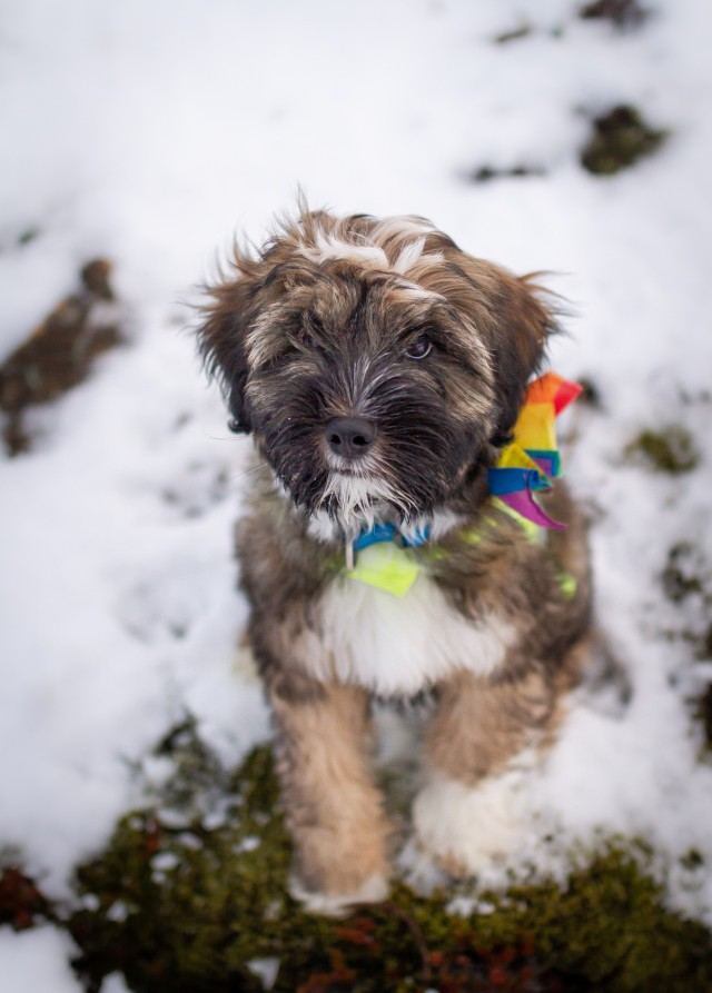 soulpups:our cutest ally 🏳️🌈