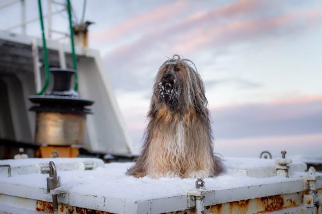 soulpups:boat dog 🌊