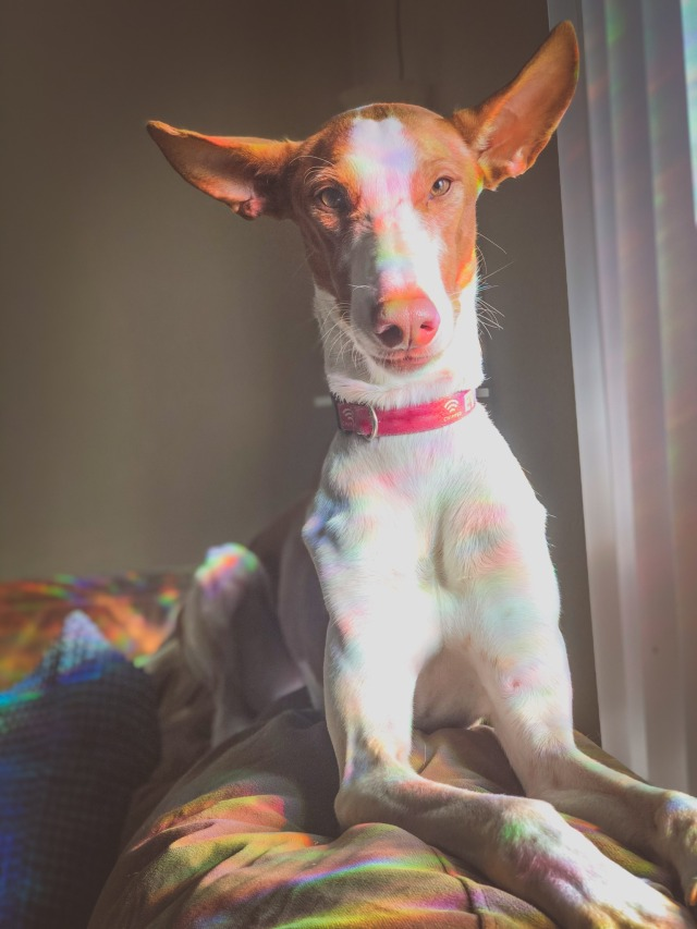 doginprogress:sun pixie