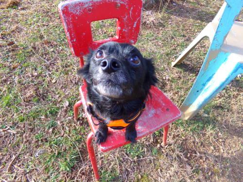 alittleblackdogblog:  Sit!